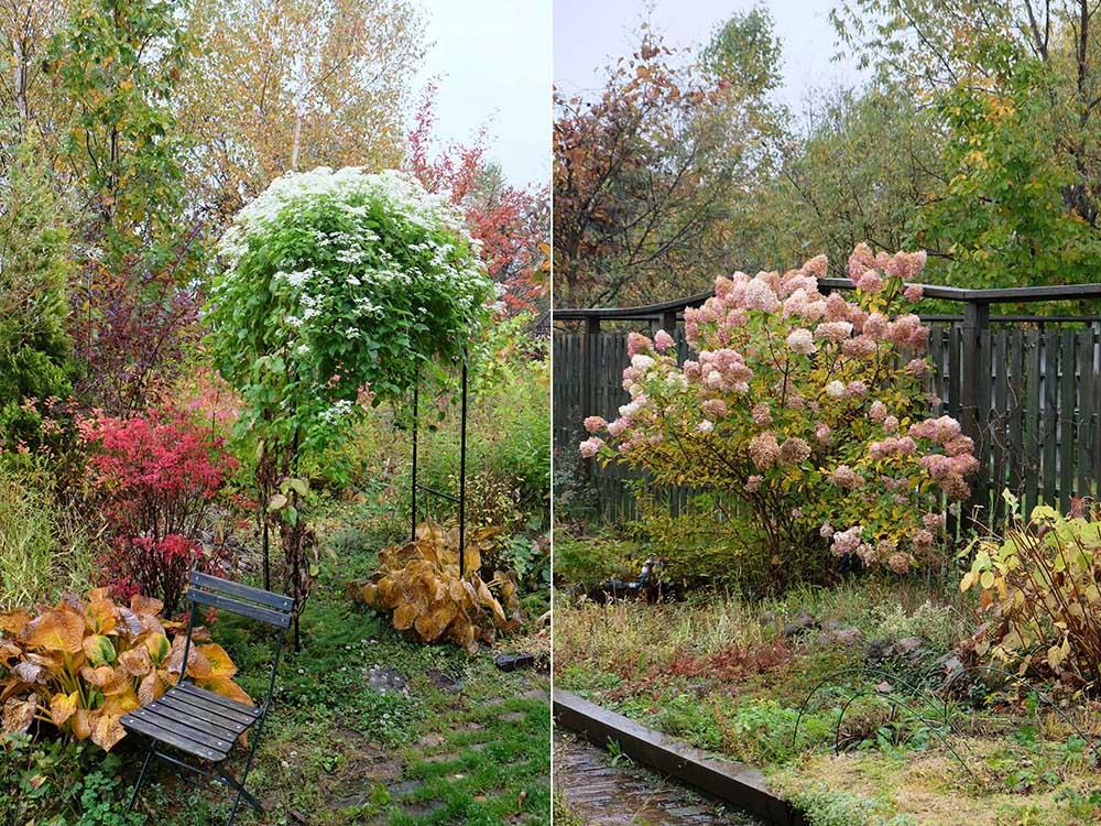 「花七曜」の秋のガーデン