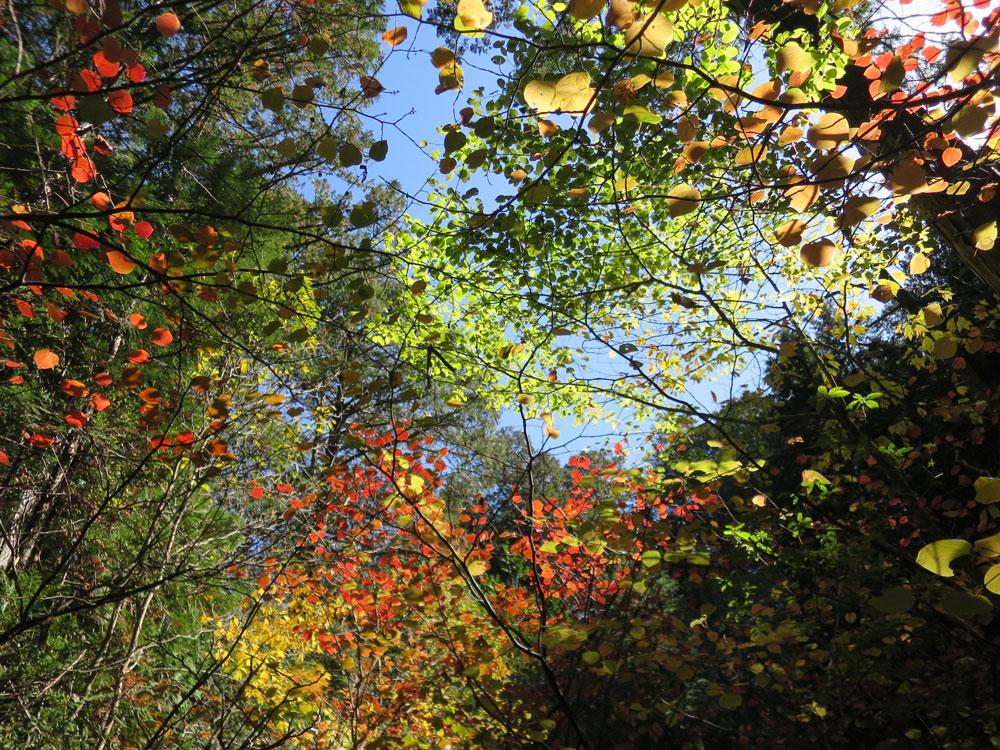 実りと彩りの秋到来!「森と人をつなぐ」自然学校〜高原便り 四季折々Vol.7〜