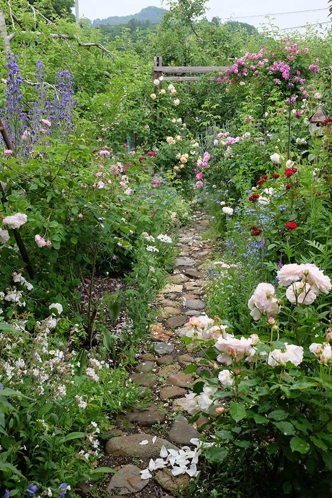 バラと宿根草の庭