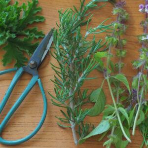 ハーブの冬越し準備をしよう! 植物タイプ別・作業方法レッスン
