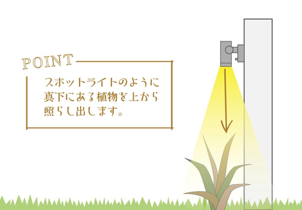 真下にある植物を照らし出す