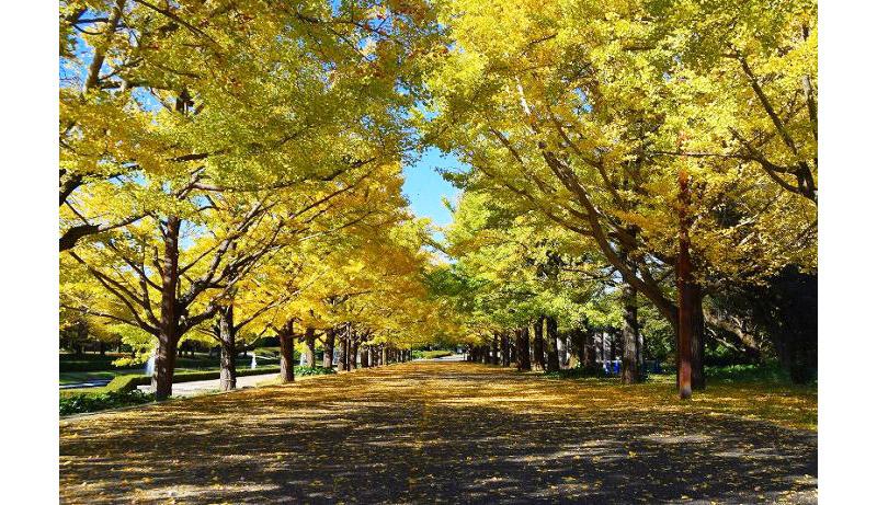 """見頃の花や紅葉を満喫!""""秋散歩""""を楽しむイベント3選"""