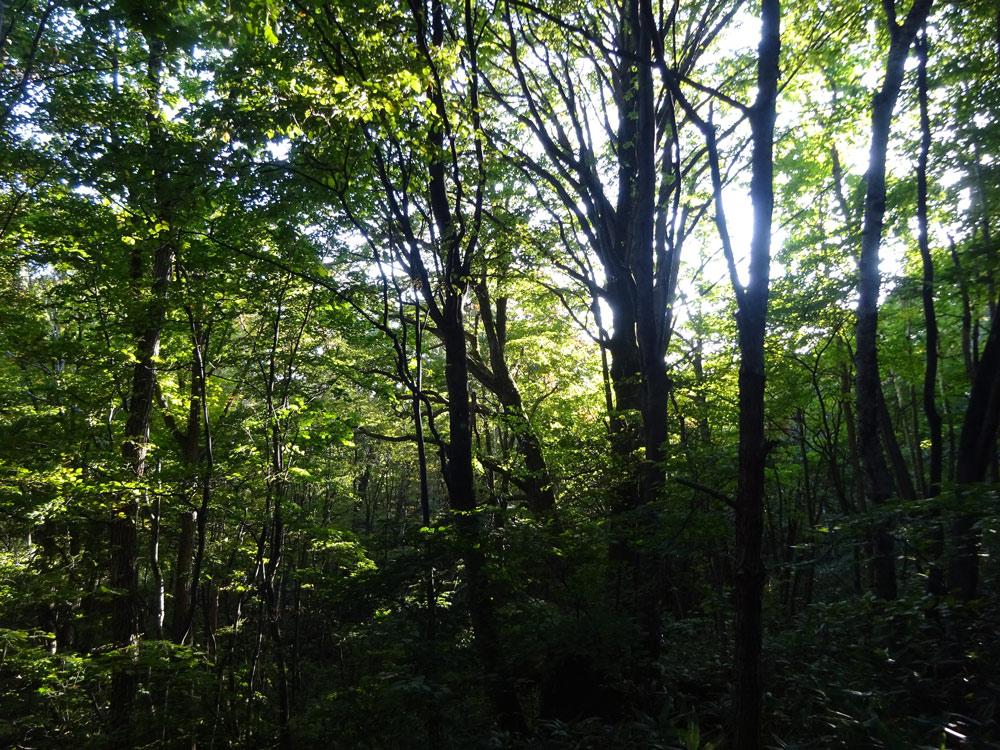陰樹の森へ