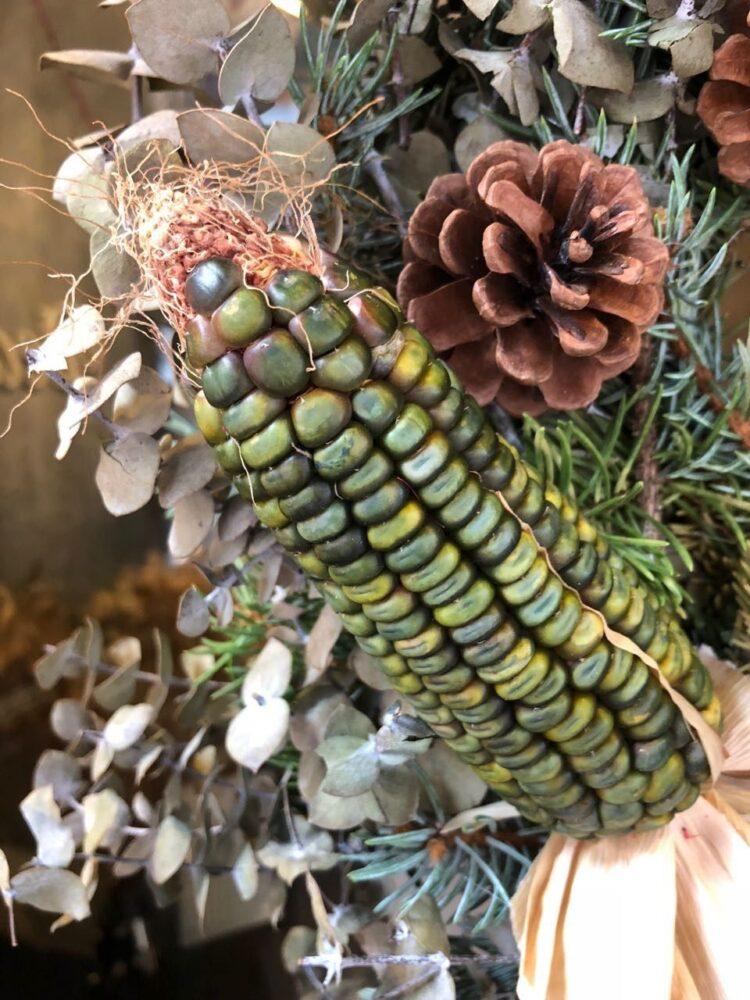 グリーンのトウモロコシZea Mays 'Oaxacan Green'