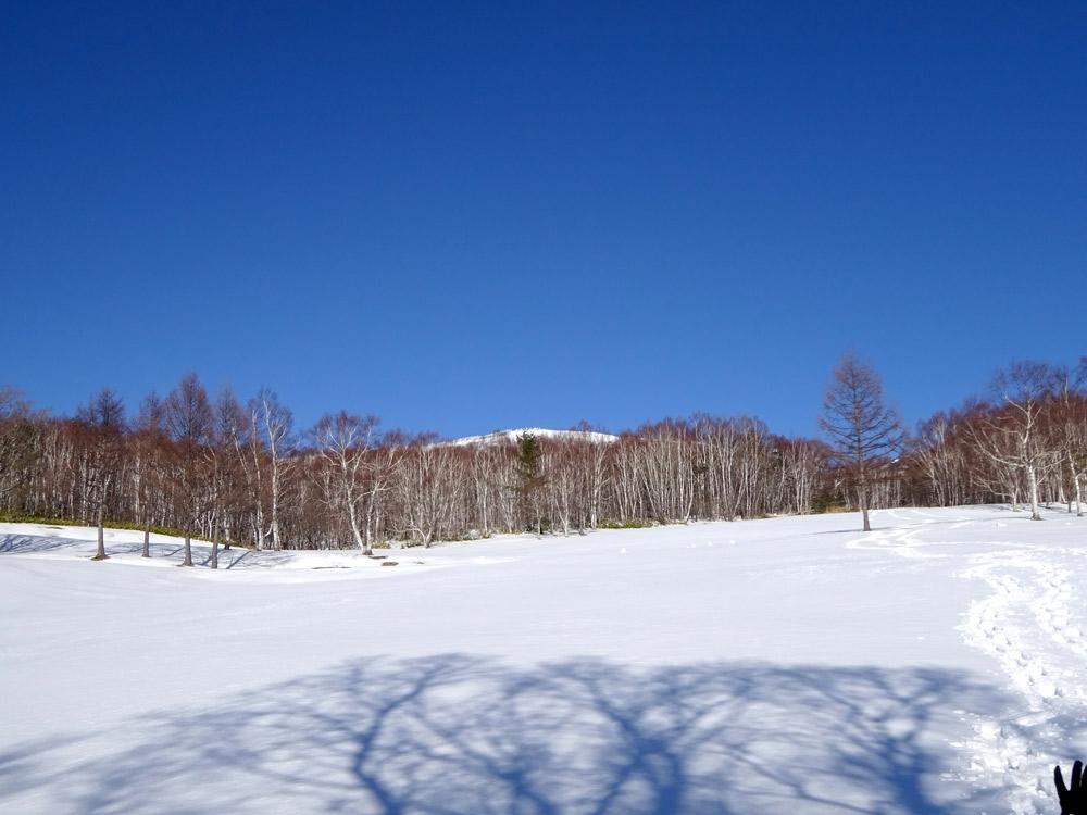 根子岳麓のシラカンバ林