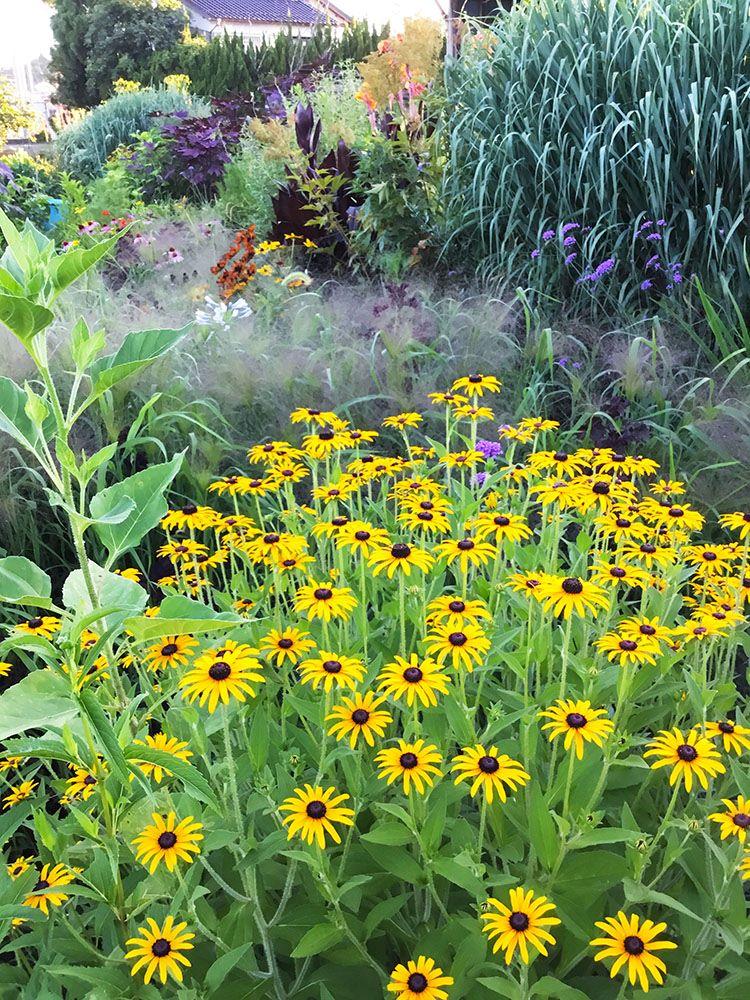 欧米よりも降水量が多く、海外の有名庭園と同じようには必ずしも育たないオーナメンタルグラス。 いなばやさんのお庭をレポートした過去記事も併せてご覧いただくと、日本の庭でのグラス類の活用法について多くの示唆が得られると思います。