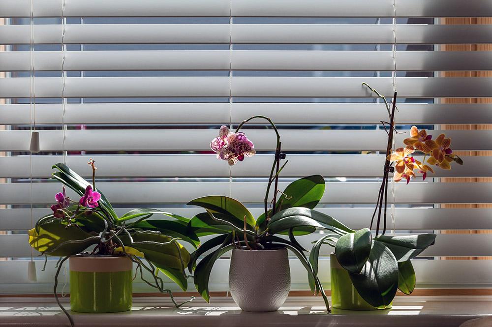 胡蝶蘭の温度管理
