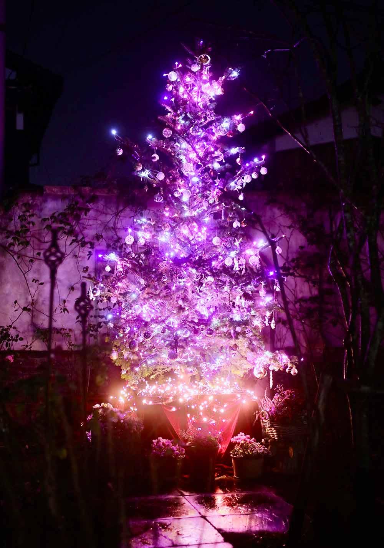 クリスマスの庭