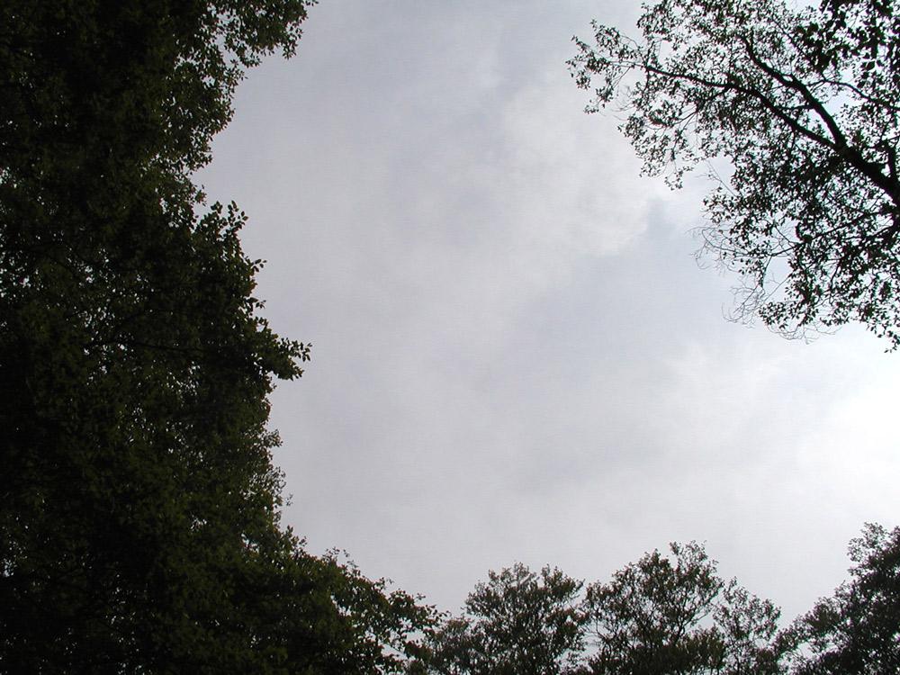 カヤの平ブナ林のギャップ
