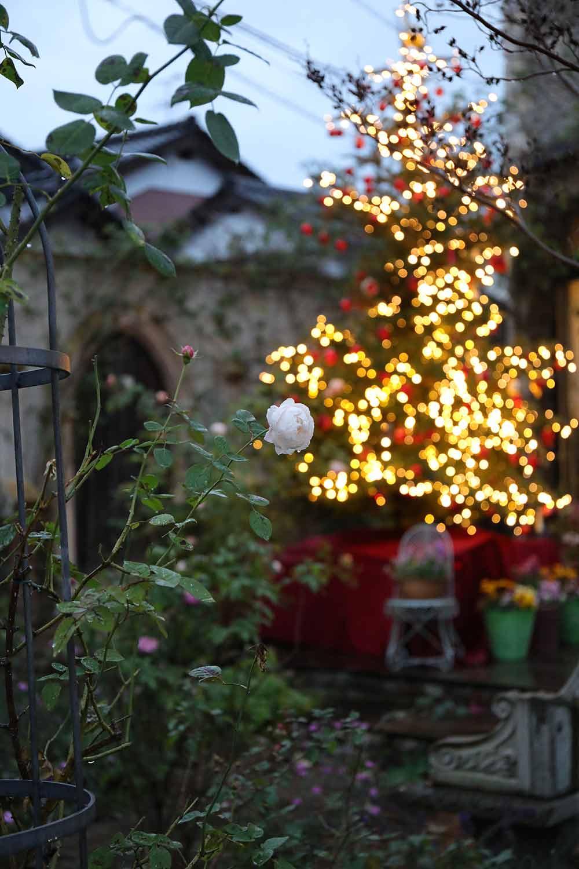 庭のクリスマスツリー