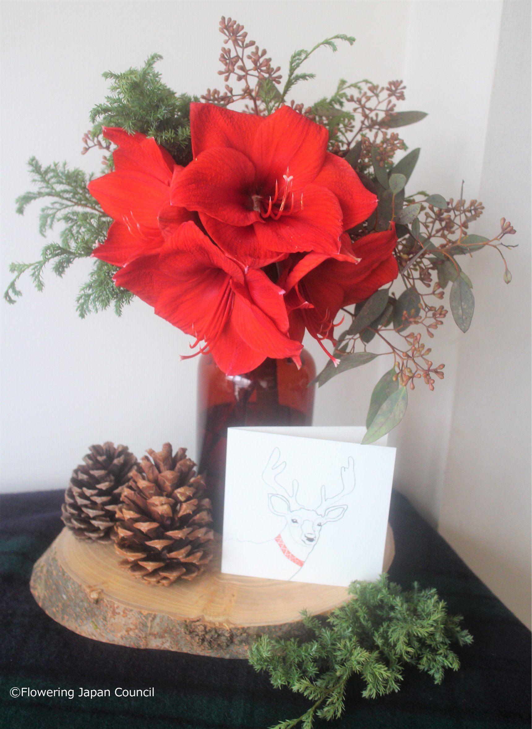 赤いアマリリスのクリスマスアレンジ
