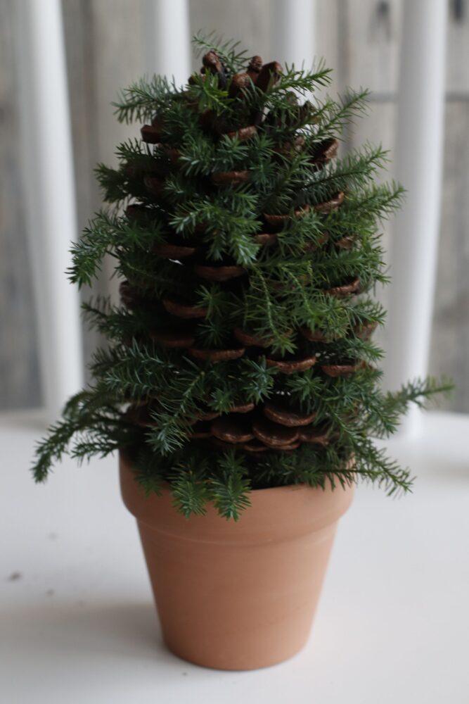 マツボックリのクリスマスツリー