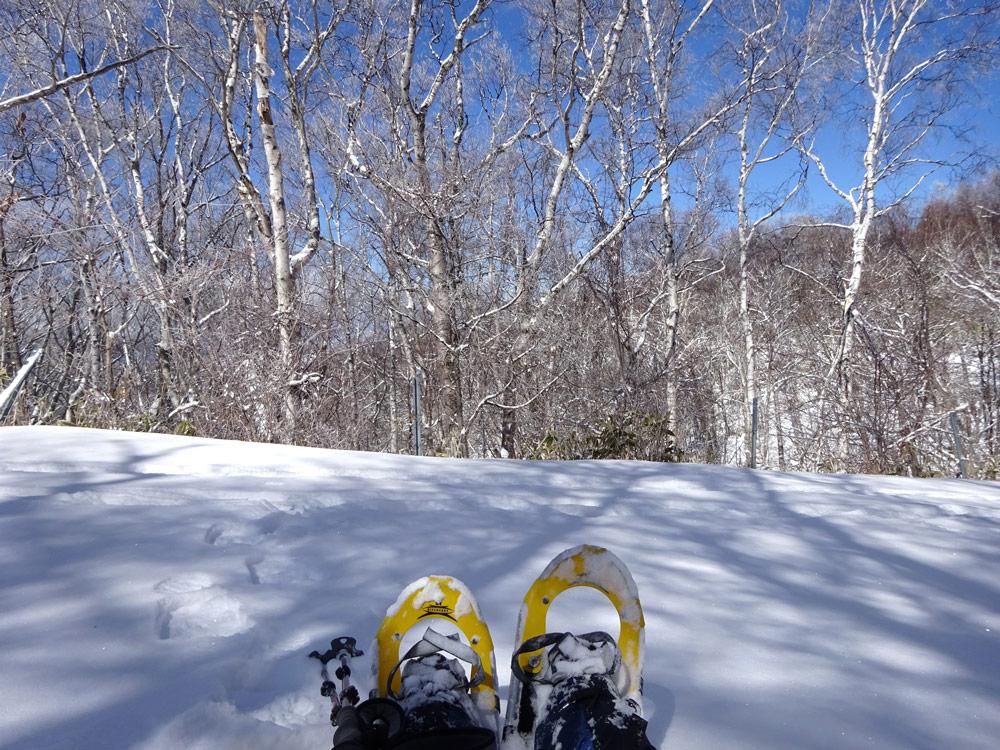 スノーシューで雪の森へ