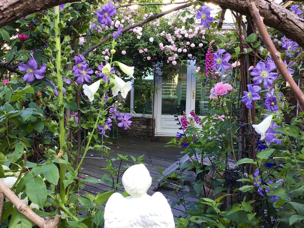 Dr,真島の無農薬有機栽培のバラの庭