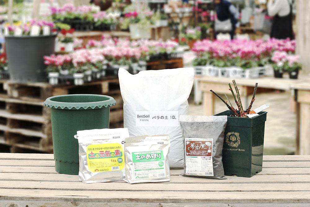 バラの鉢植えセット