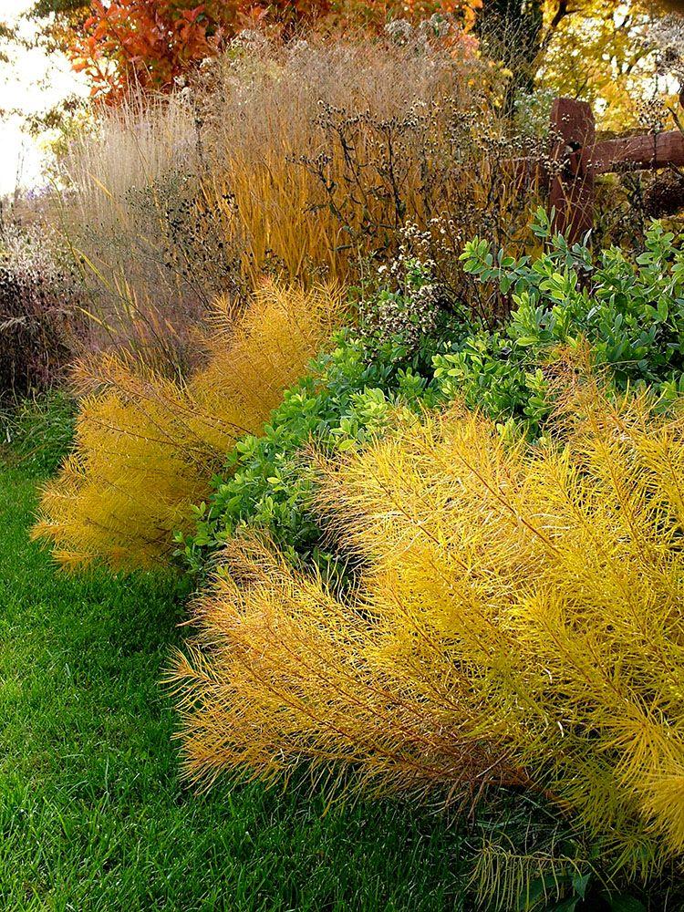 秋の宿根草ボーダーガーデン