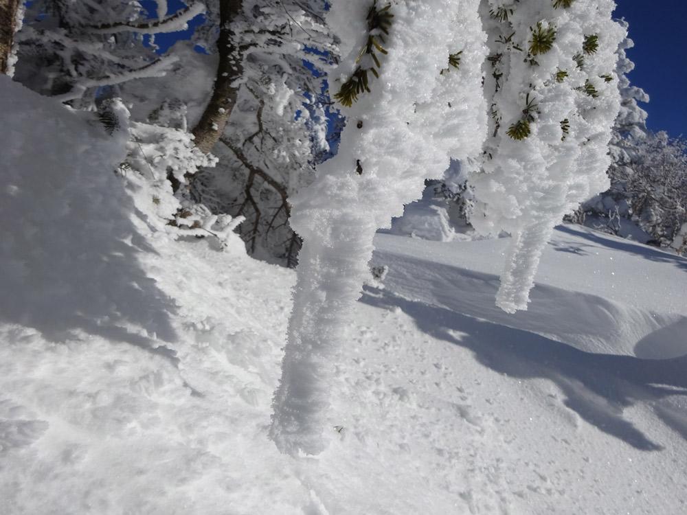 霧氷から樹氷へ