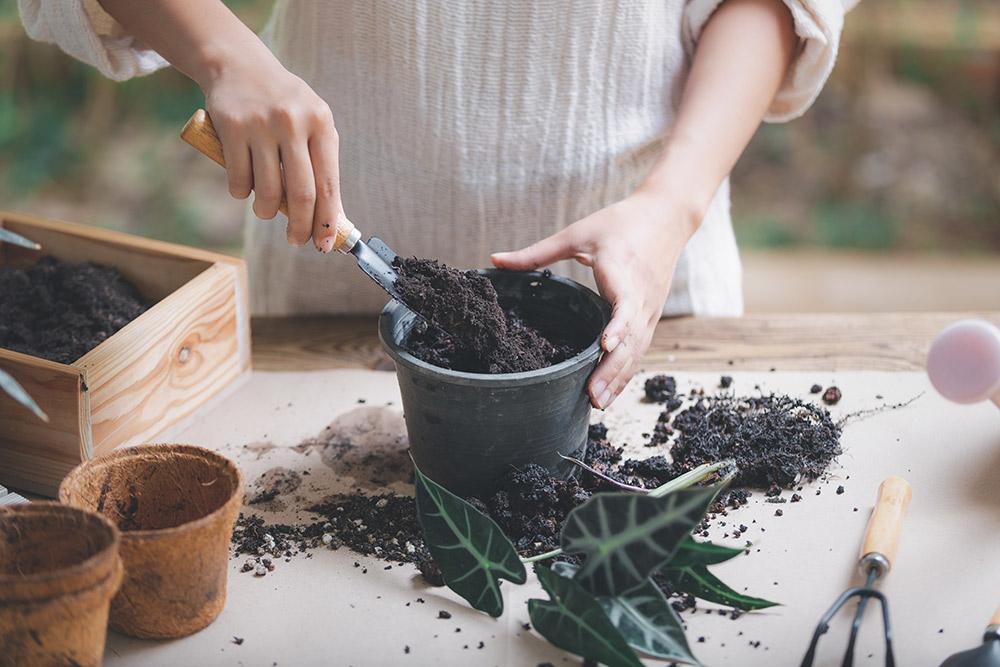 植物の植え付け