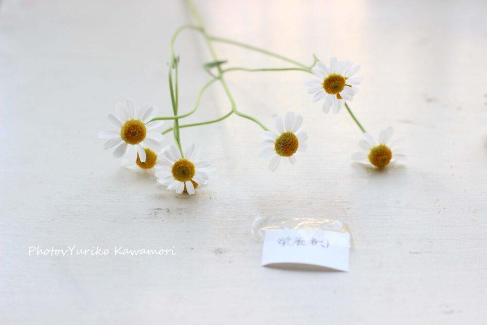 花の長もち実験