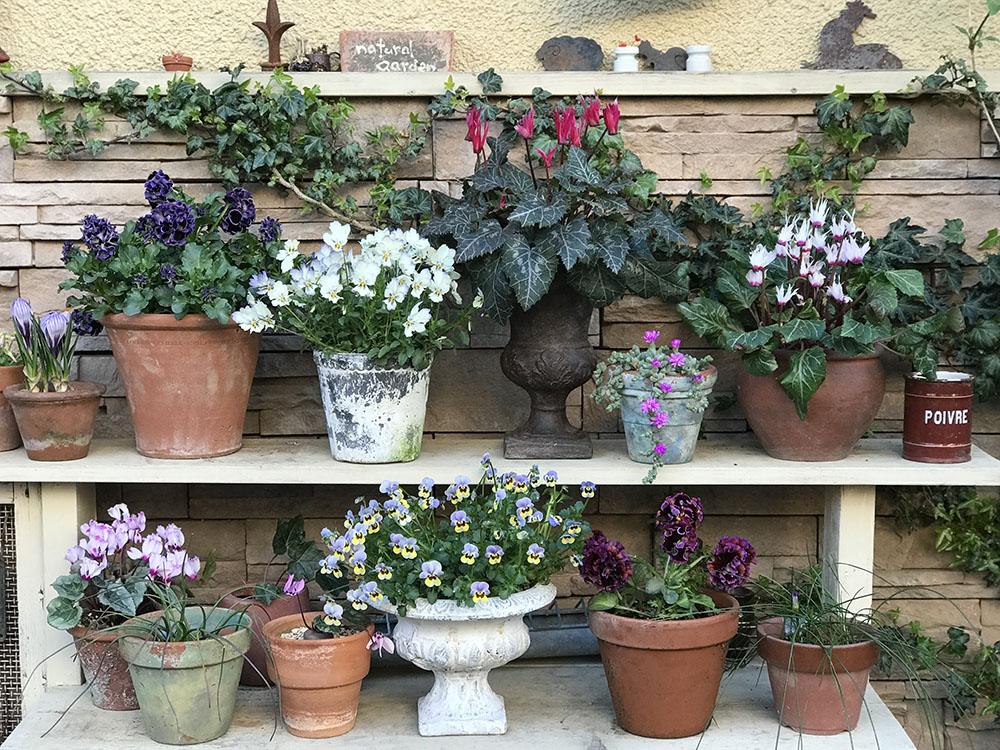 冬の庭の花