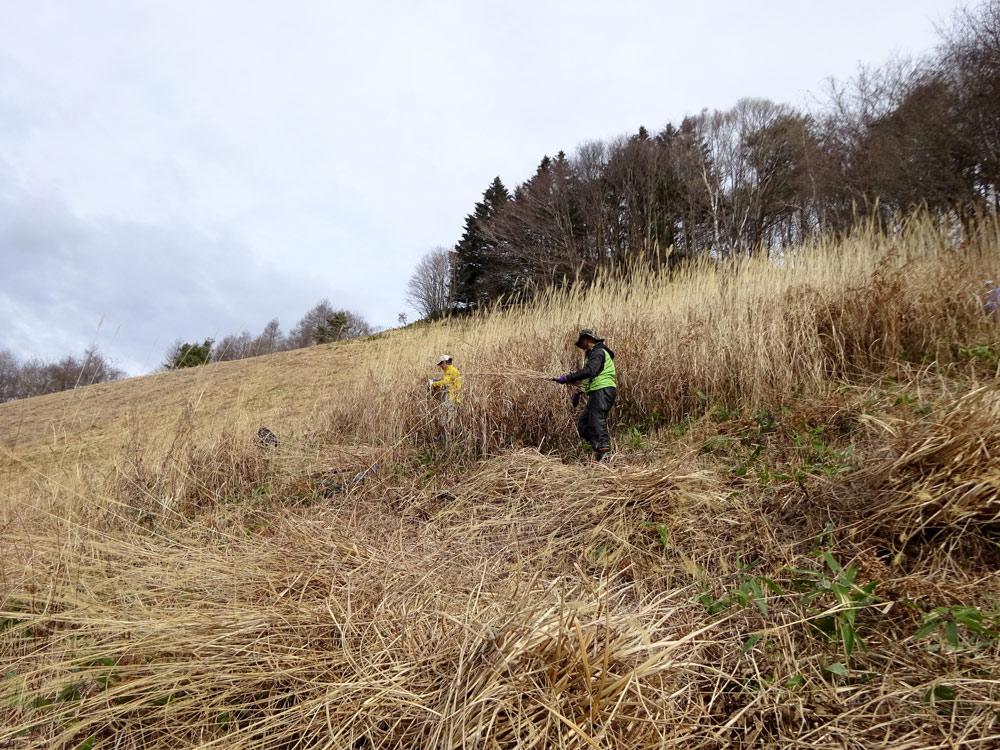 草原のススキを刈る