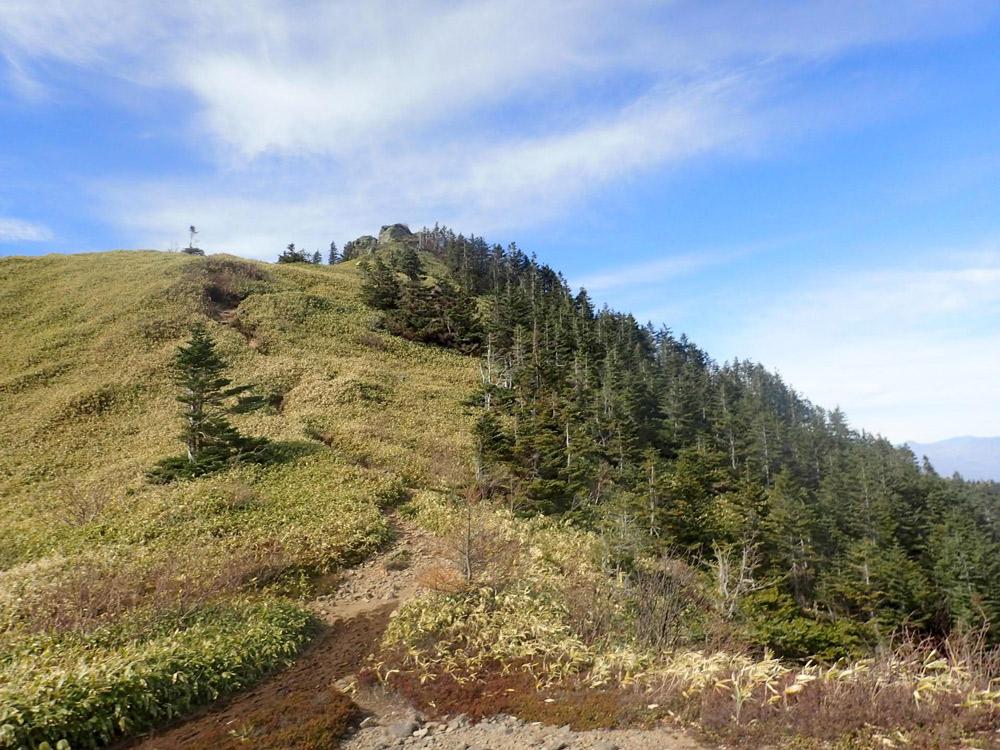 山頂付近のオオシラビソの森