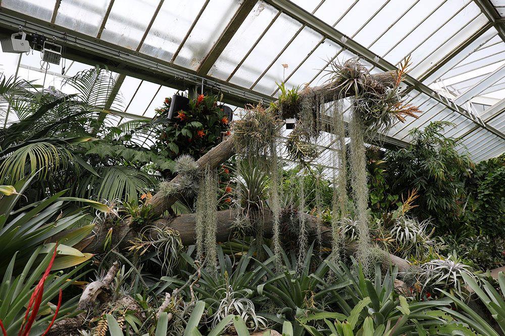 湿潤熱帯植物