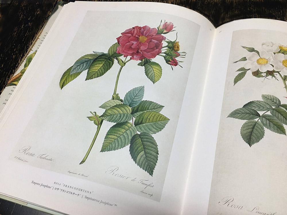 ルドゥーテの『バラ図譜』