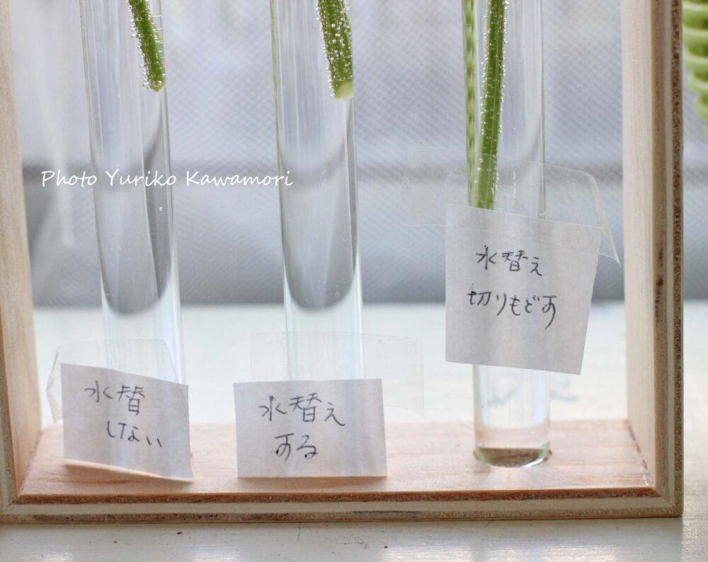 切り花の長もち実験