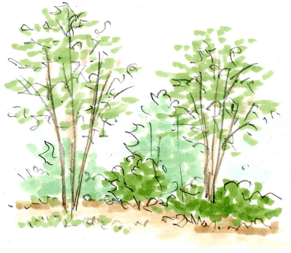 庭の広さに合わせて植樹する