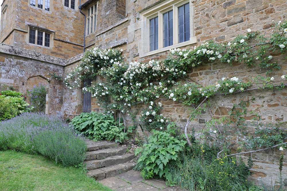 ブロートン城のバラ