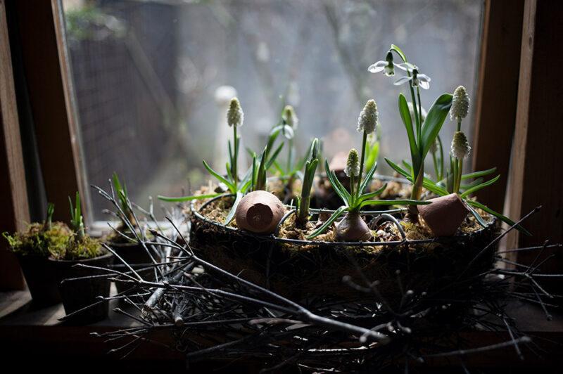 早春の球根花