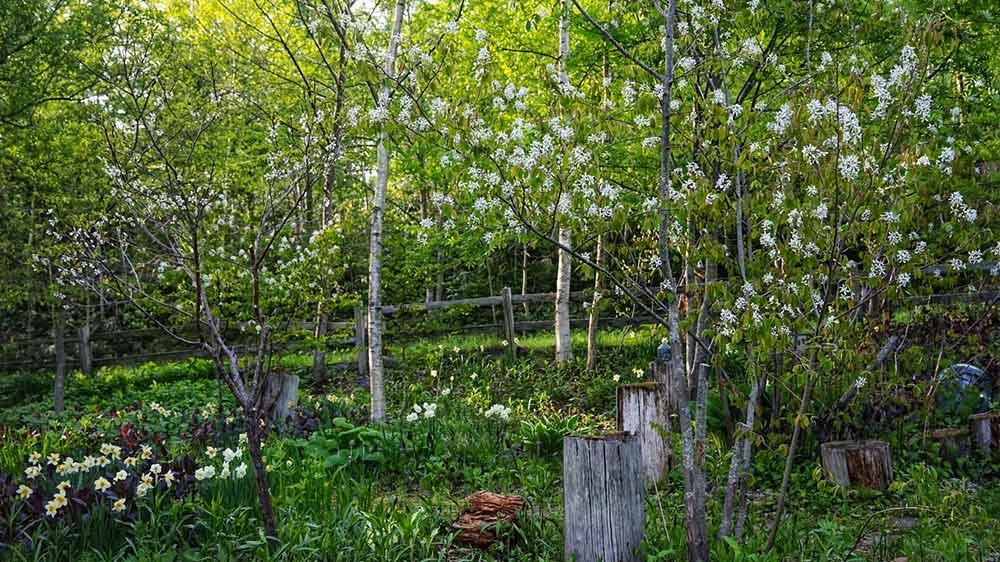北海道の庭