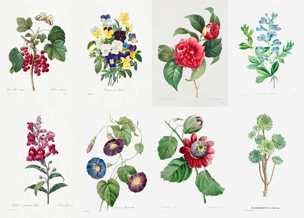 ルドゥーテの植物画