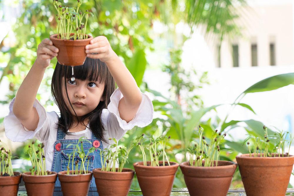 鉢栽培の植物