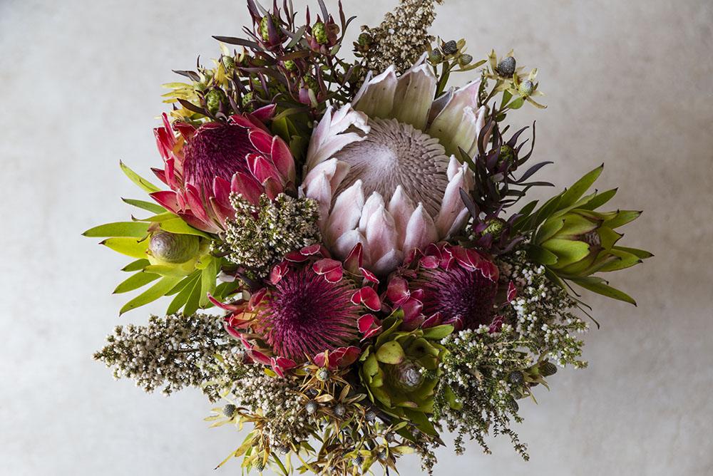 南アフリカの花