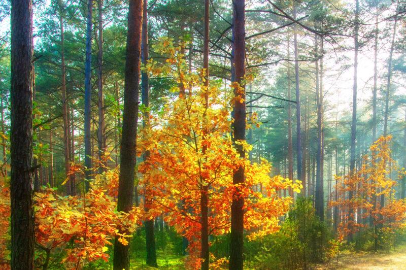 自然と共に過ごす「雑木の庭」Vol.2