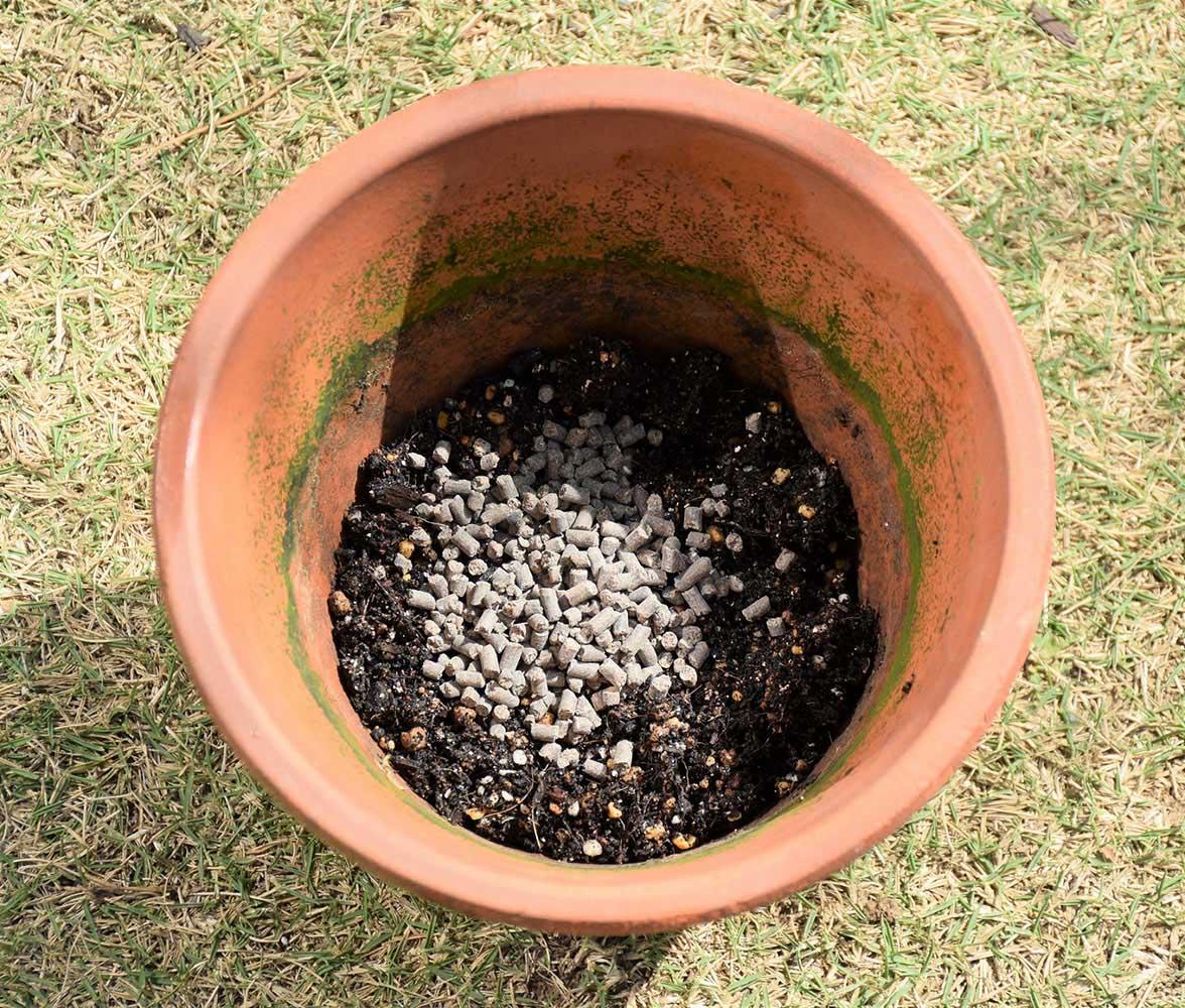 鉢植えギフトローズの植え替え