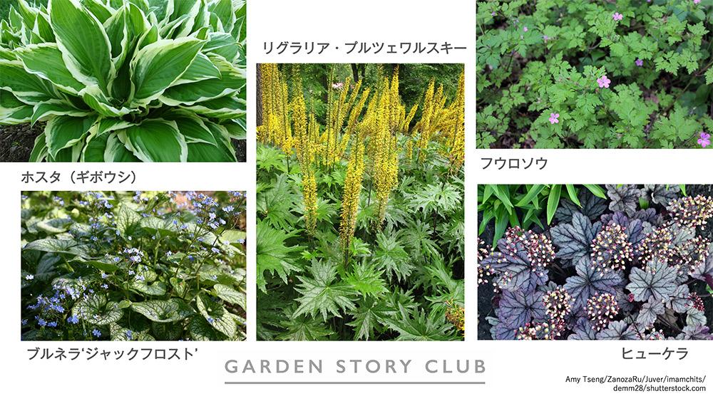 日陰の植物