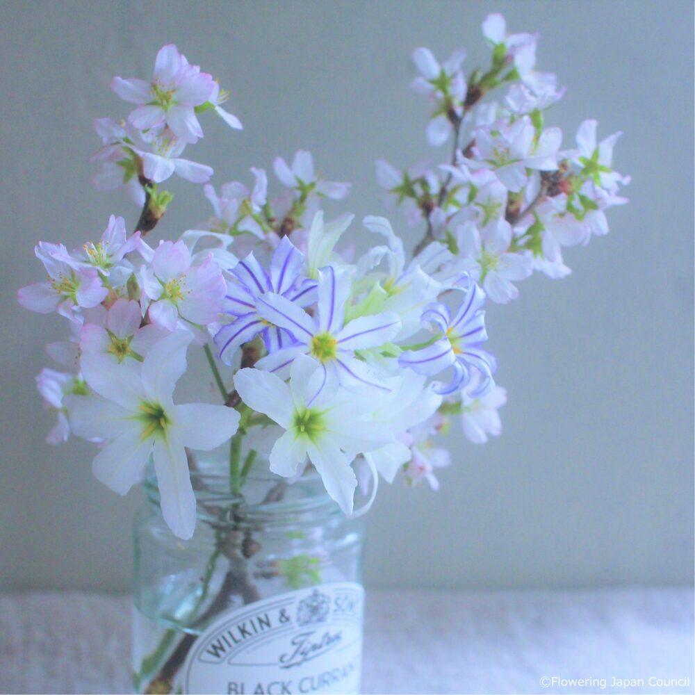 啓翁桜とリューココリネ