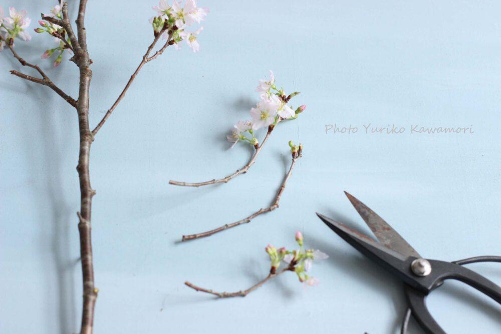 桜の枝のアレンジ