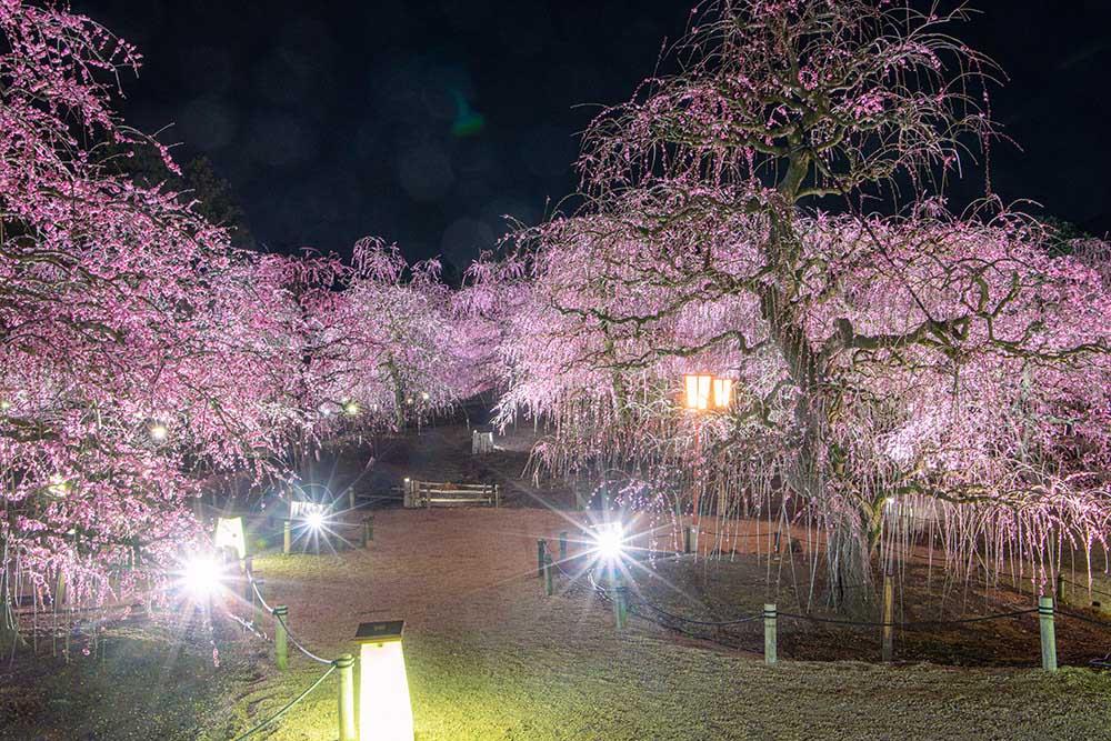 鈴鹿の森庭園のライトアップ