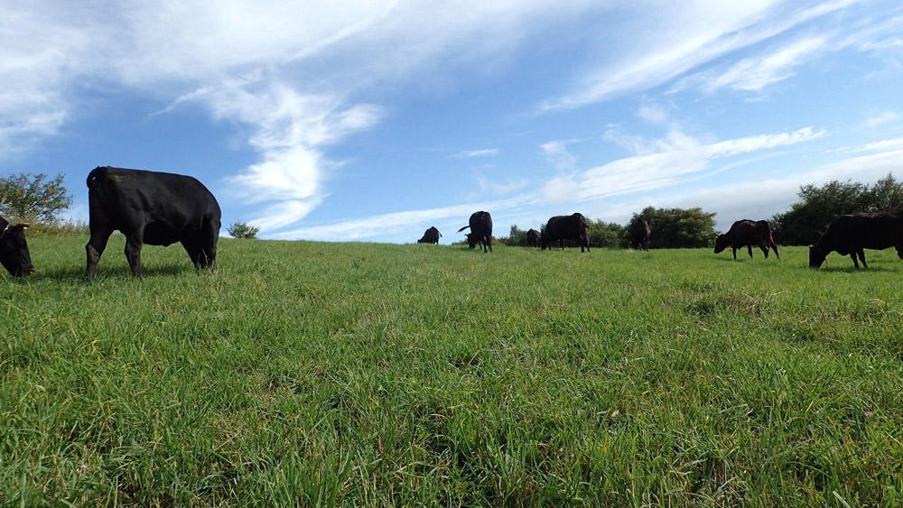 牧場の草原