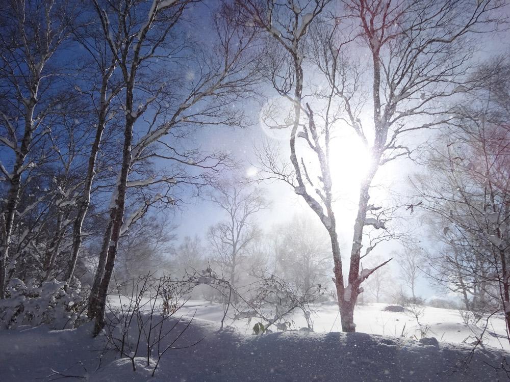 光と雪と森と