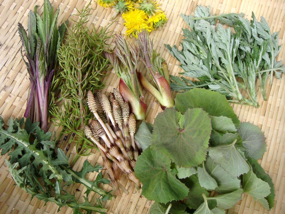 春の恵みを求めて「山菜イベント」