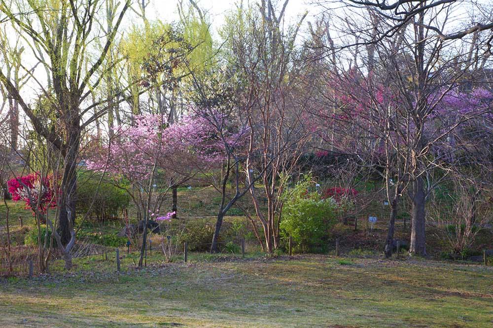 早春の花木