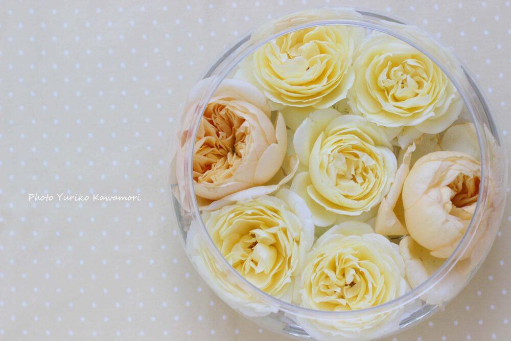 切りバラの復活法