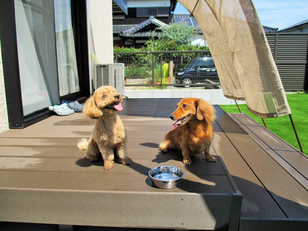 高齢化した愛犬のためにできる、庭のリフォーム