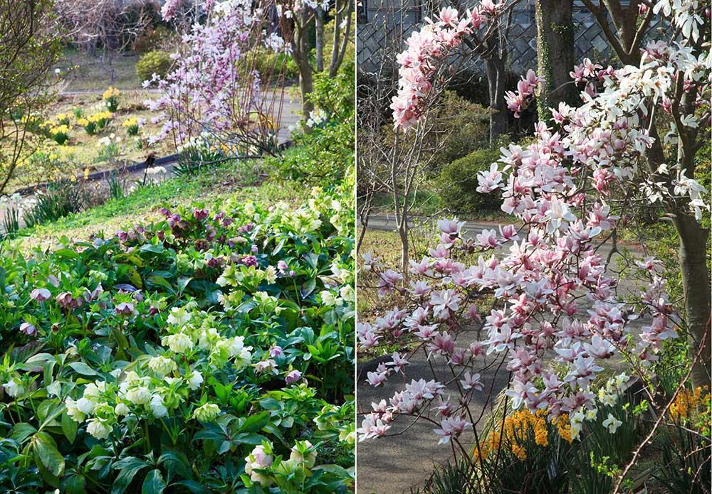 早春の京成バラ園