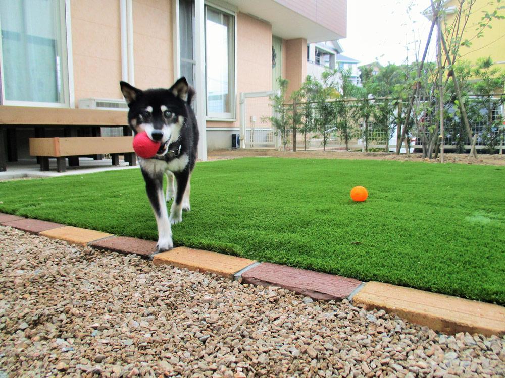 片目が義眼のわんちゃんが安全に遊べるようにと、庭をふわふわの人工芝に